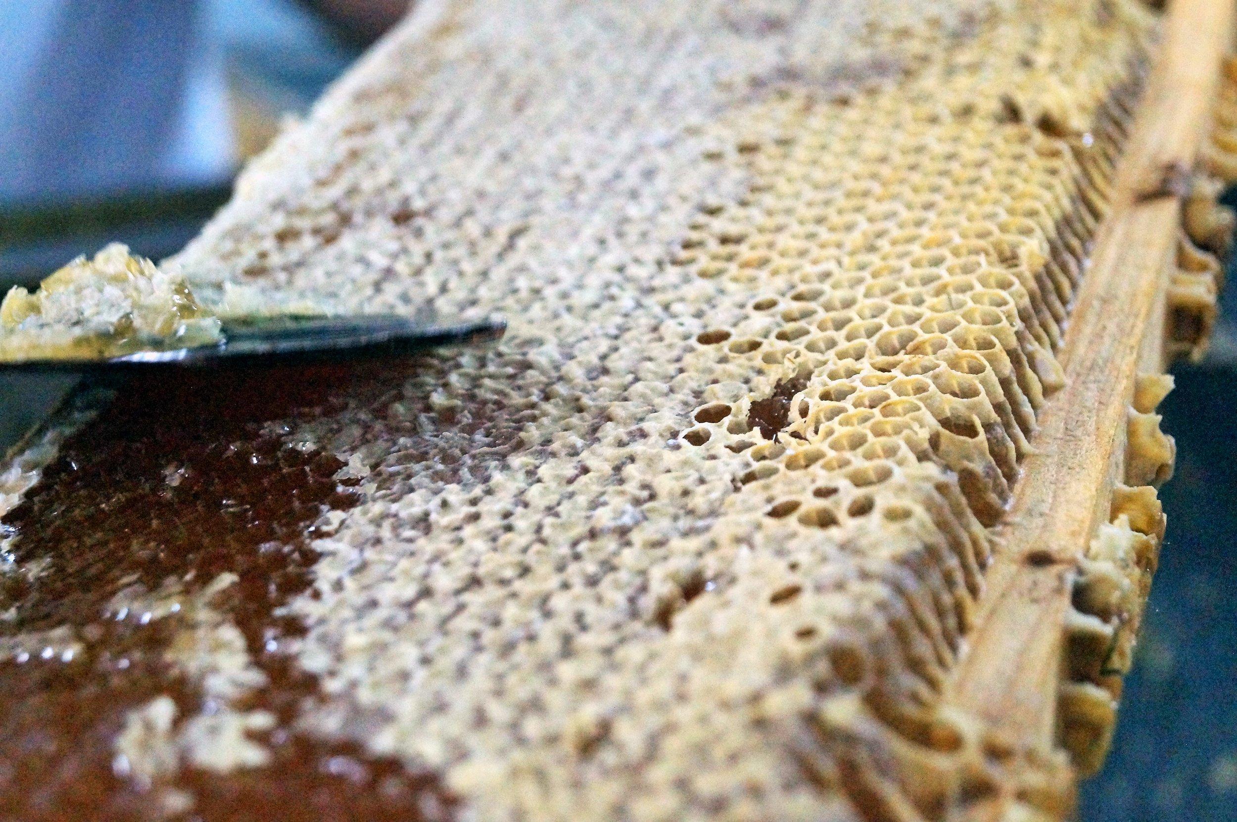 Desoperculando un bastidor de miel en Duxi