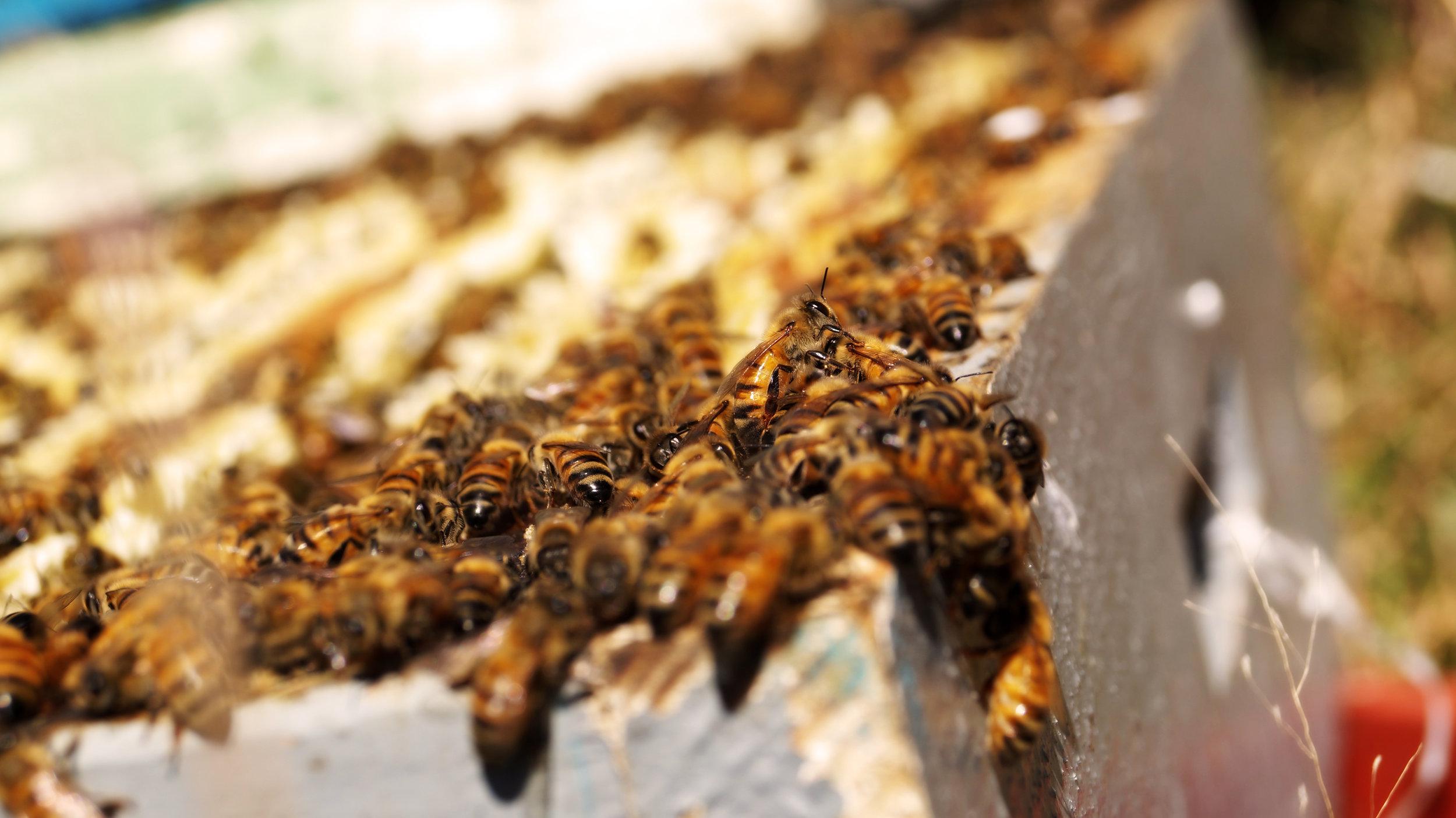 Alza con miel y abejas