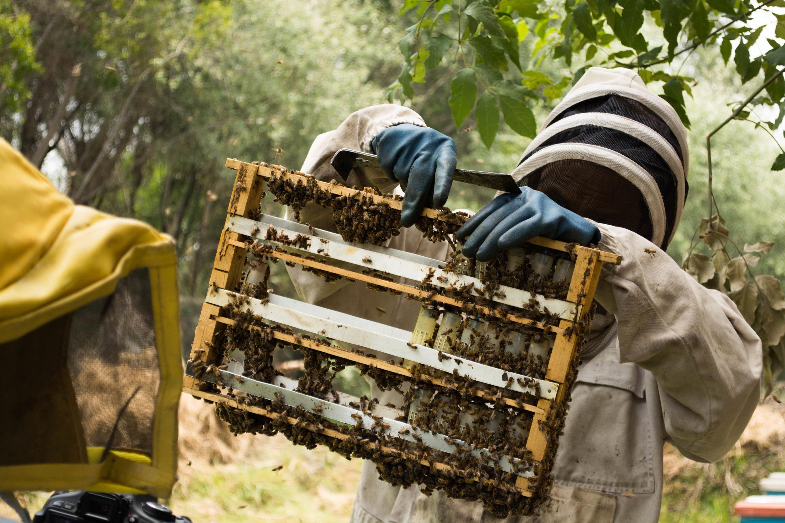 Trato Directo,Comercio Justo - Ese soy yo, Omar López, fundador de Duxi, trabajando en los campos donde producimos nuestra miel. Contáctanos hoy para surtir tu negocio, mi esposa o yo responderemos todas tus dudas directamente.Somos Duxi, distribuidores de miel radicados en Puebla. Ofrecemos miel y productos apícolas de la más alta calidad para clientes de México y el extranjero.Llámanos o escríbenos, te atenderemos con gusto y responderemos todas tus dudas con respecto a la elaboración y calidad de nuestros productos.