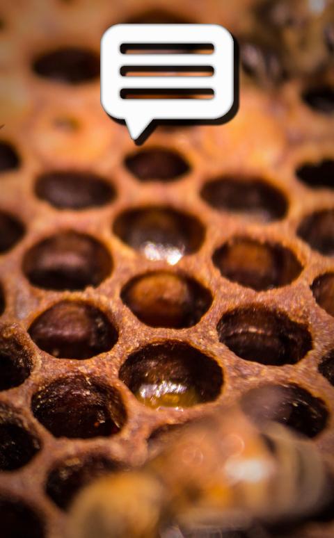 mayoreo de miel y productos apícolas -
