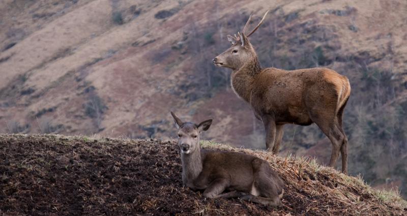 settings for wildlife photography-.jpg