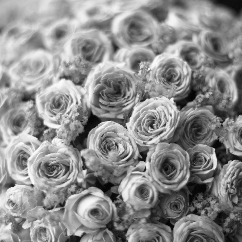black and white-7053.jpg