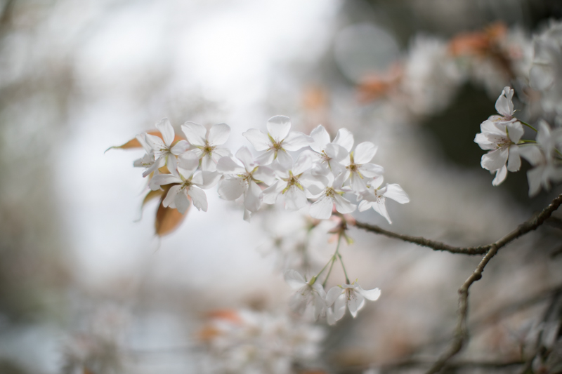 Nice enough photo of the blossom, but a disappointing, distracting background of white sky and grey shadows