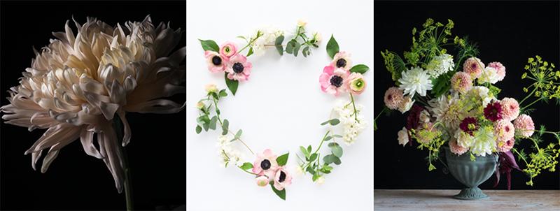 grey day flower photography.jpg