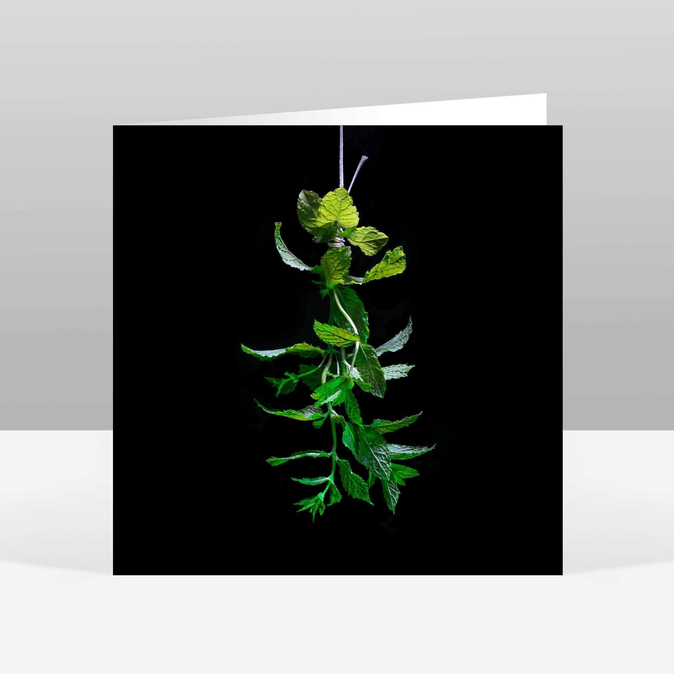 3 Mint Christmas Card Jo Hounsome Photography.jpg