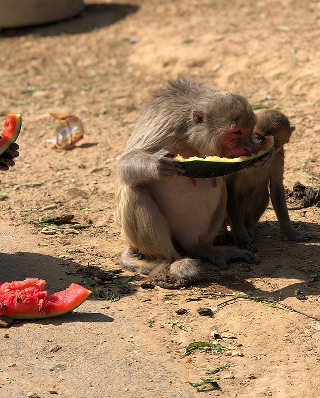 That's the piece of melon I fed to this little chap. I love this photo.  We arrived in Delhi for our over night stop before our early flight to Mumbai.