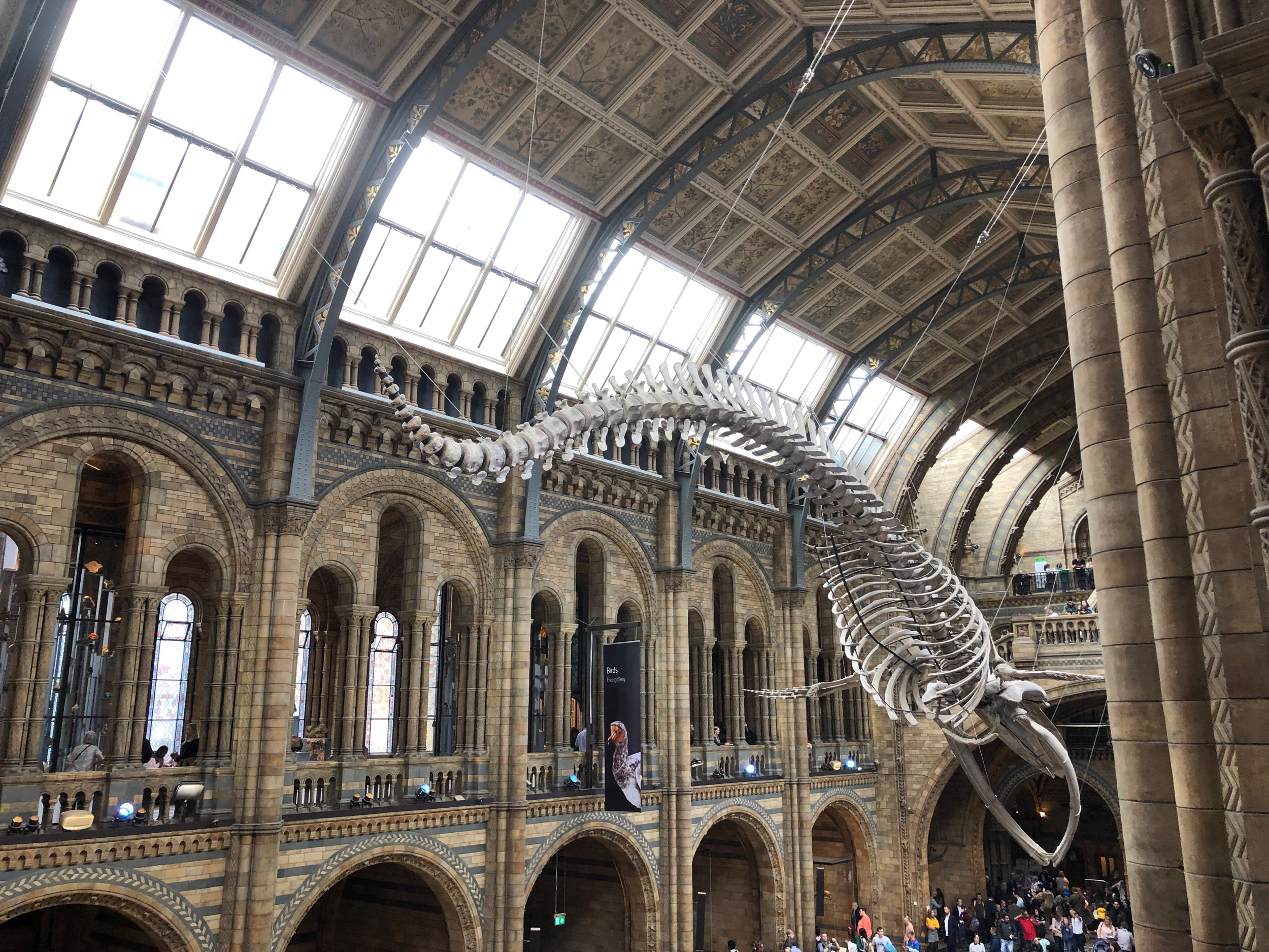 The Natural History Museum is one of my favourite places in the world. The building is incredible. And there's a cafe that sells one of the best carrot cakes I've ever had, I have it every time.