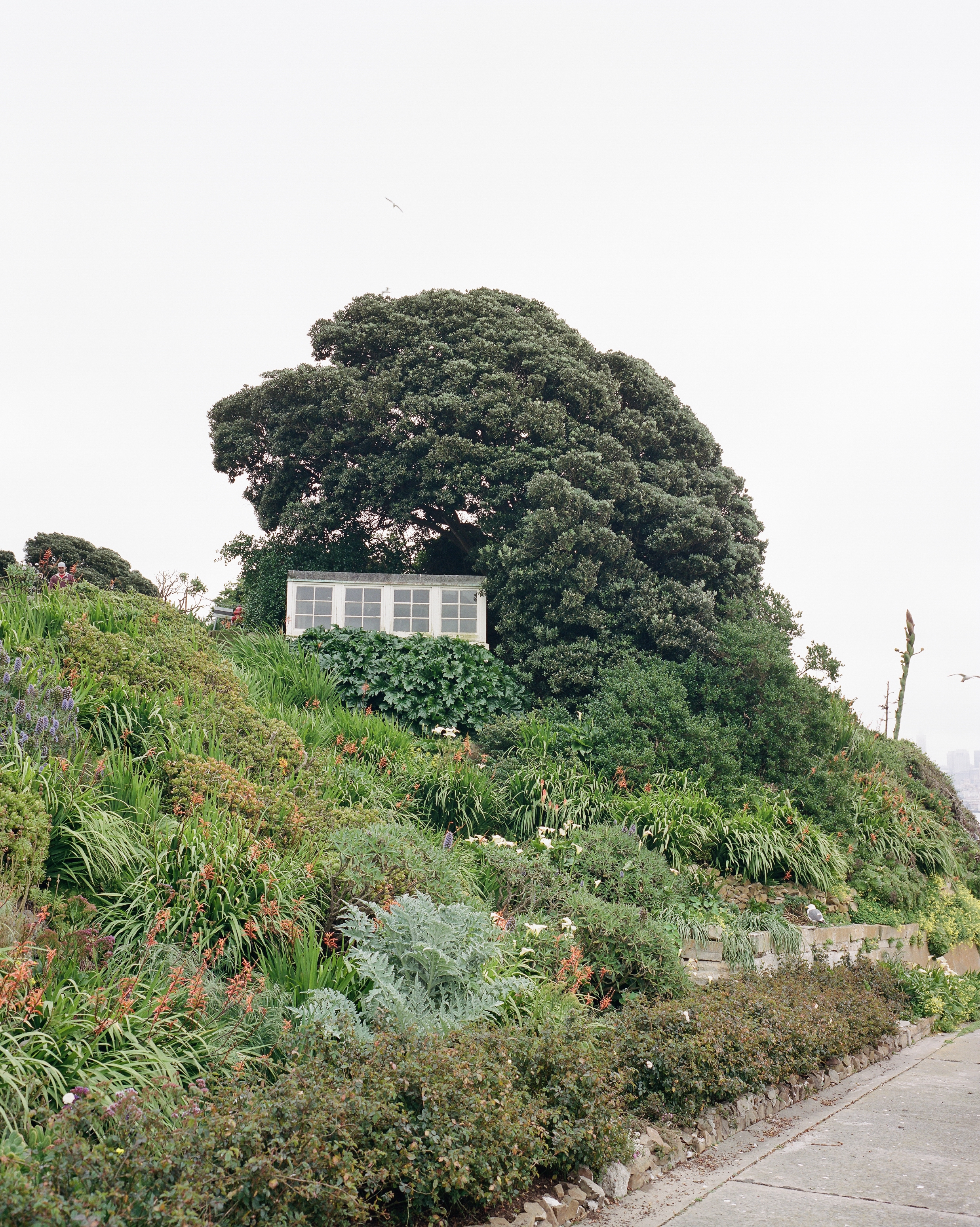 Frame 4  Little garden house on Alcatraz Island
