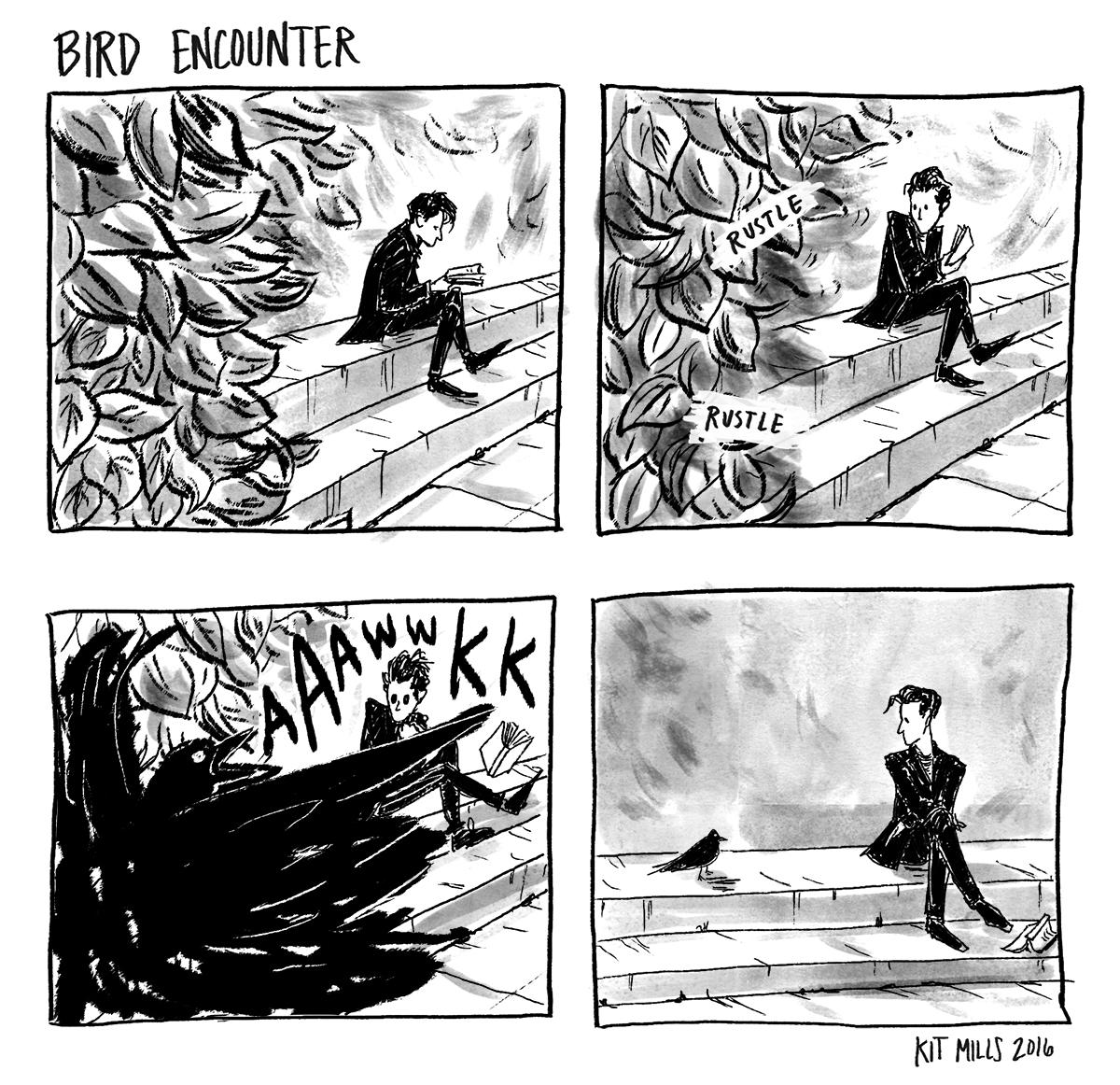 bird encounter