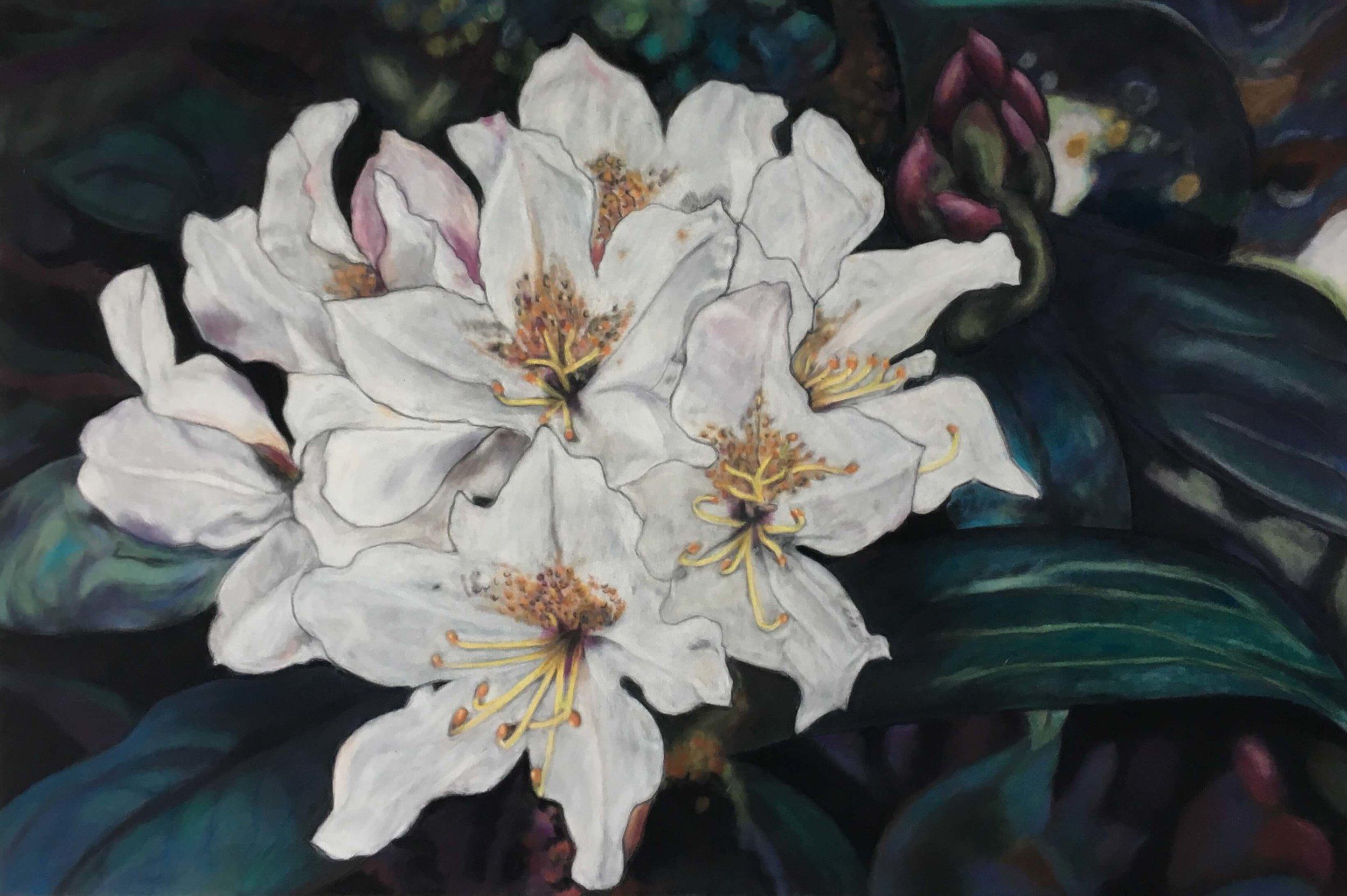 Rhododendron, Ute Latzke, Pastellkreide auf Velour und MDF, 60x 40 x 1 cm, 2017, Preis: 600,-