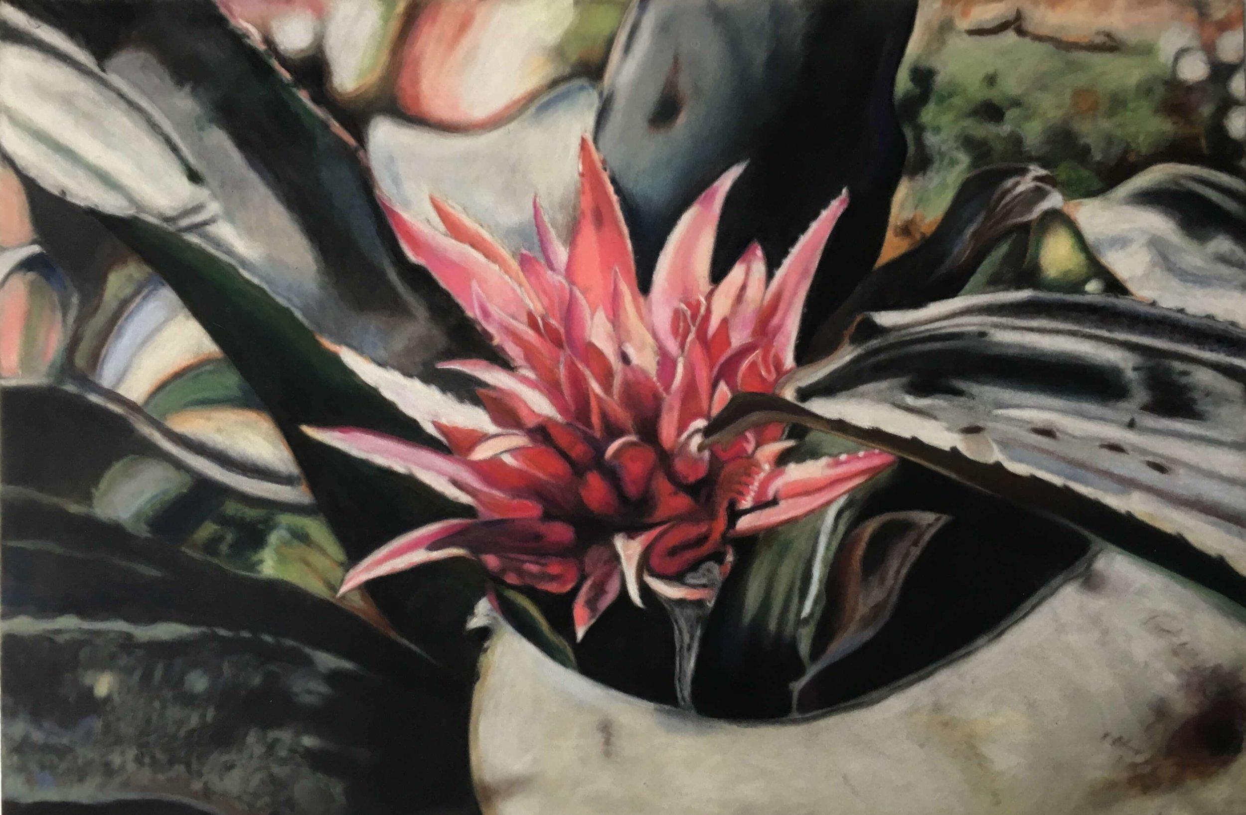 Aechmea, Ute Latzke, Pastellkreide auf Velour und MDF, 60x40x1 cm, 2017, Preis: 600,-