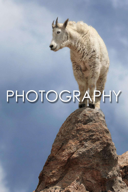 photography-overlay.jpg