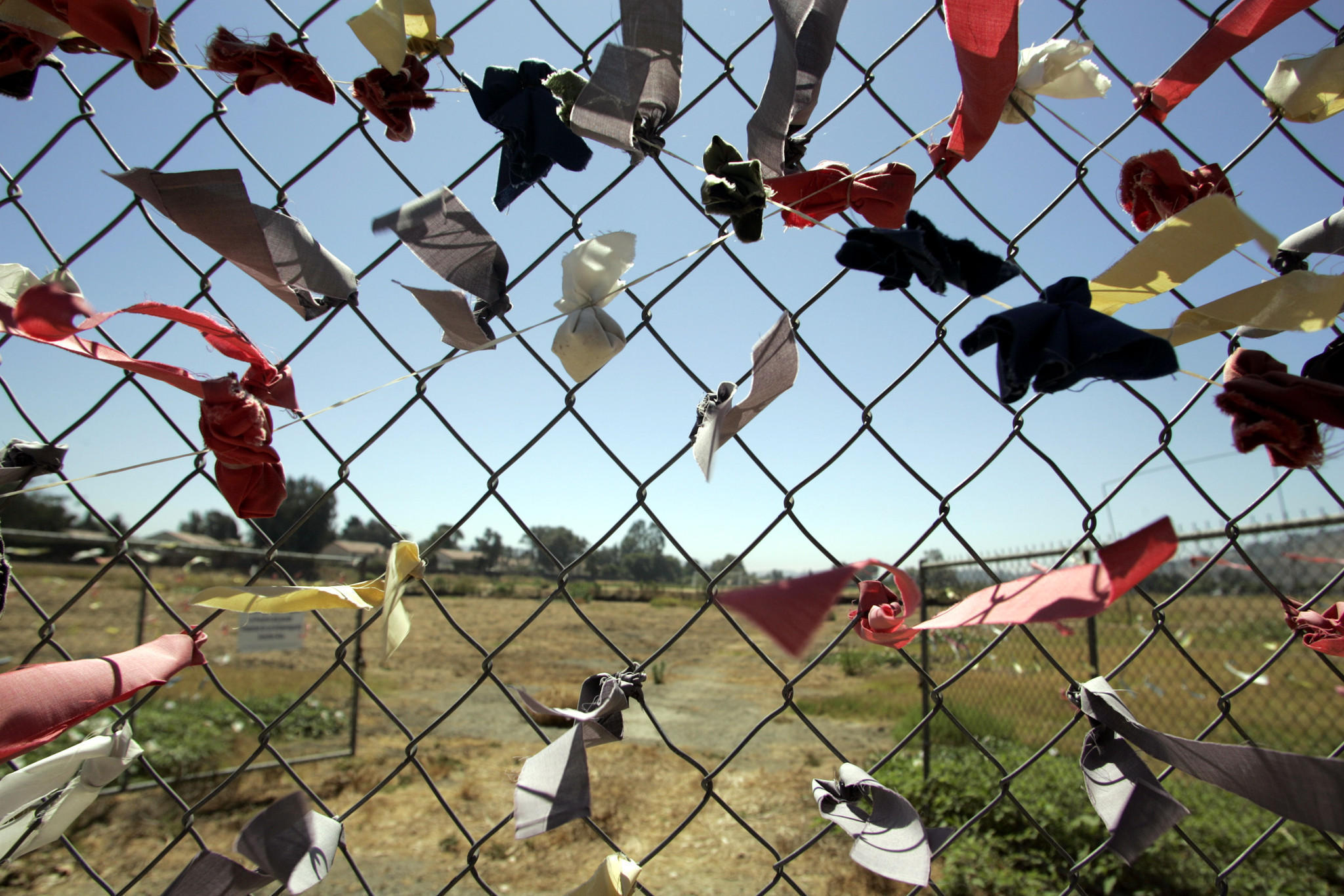 Colored ribbons placed by Juanenos Indians surround sacred burial ground in San Juan Capistrano. Photo credit: Mark Boster/Los Angeles Times