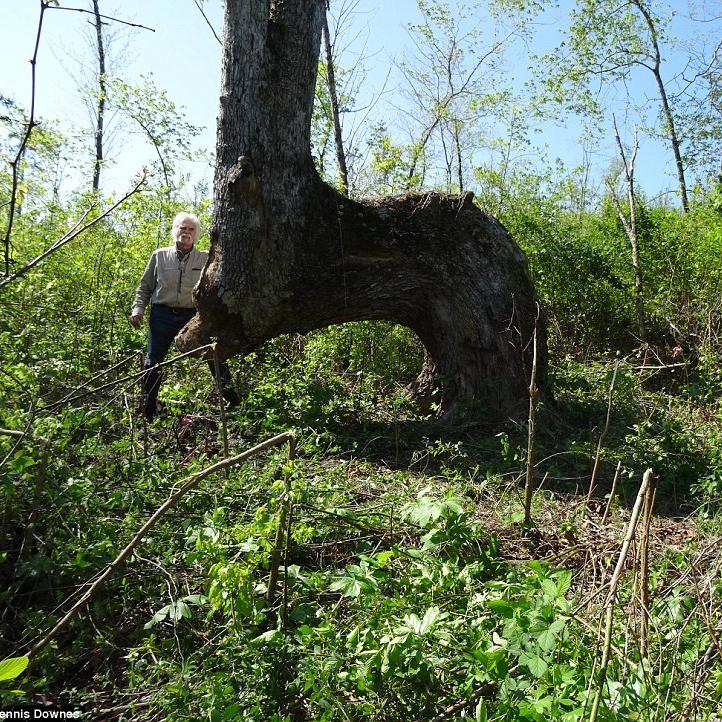 Bent Native Tree Marker