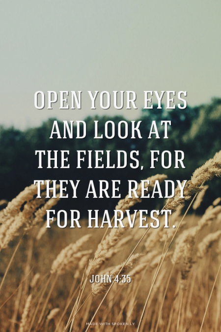 ripe for harvest john 4 lutheran indian ministries