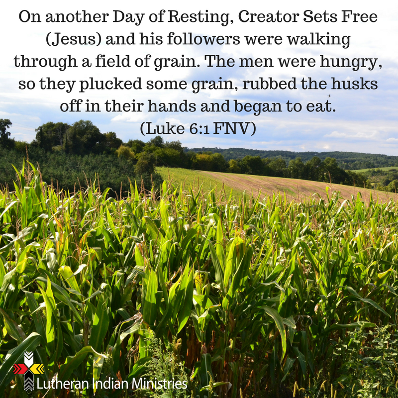 the disciples eat from a corn field on the sabbath luke 6:1 fnv lutheran indian ministries