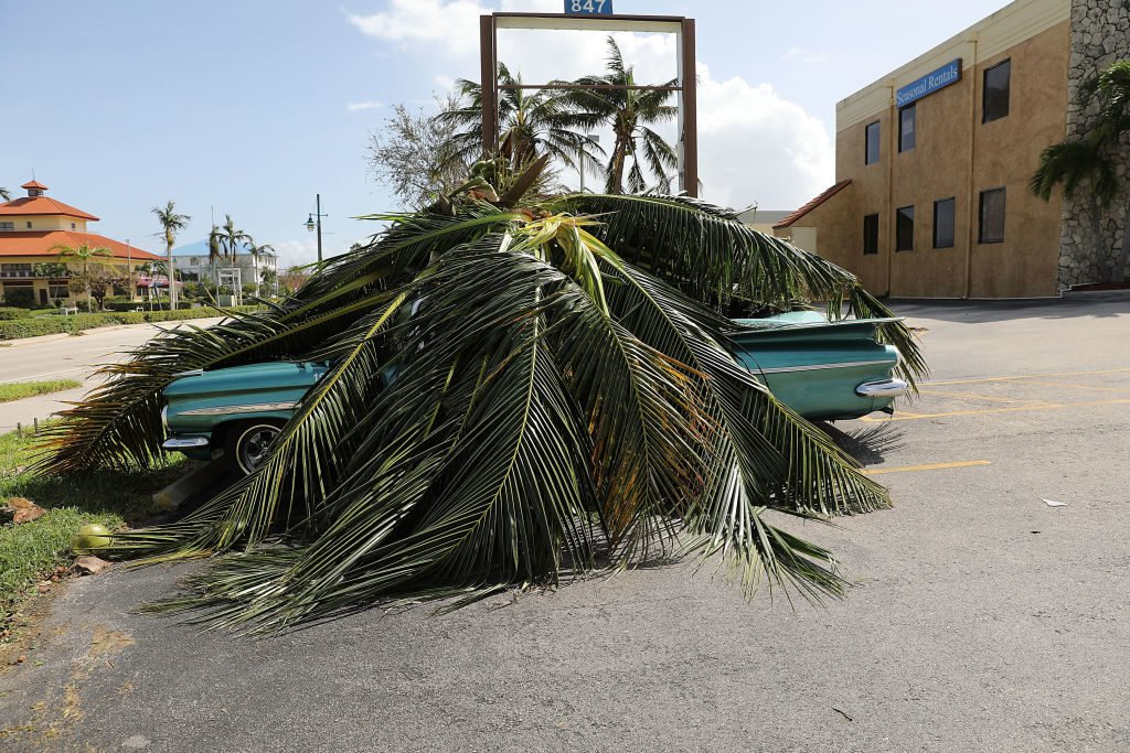 A car covered by a downed tree is shown the morning after Hurricane Irma swept through the area on September 11, 2017 in Marco Island, Florida. (Photo by Spencer Platt/Getty Images)