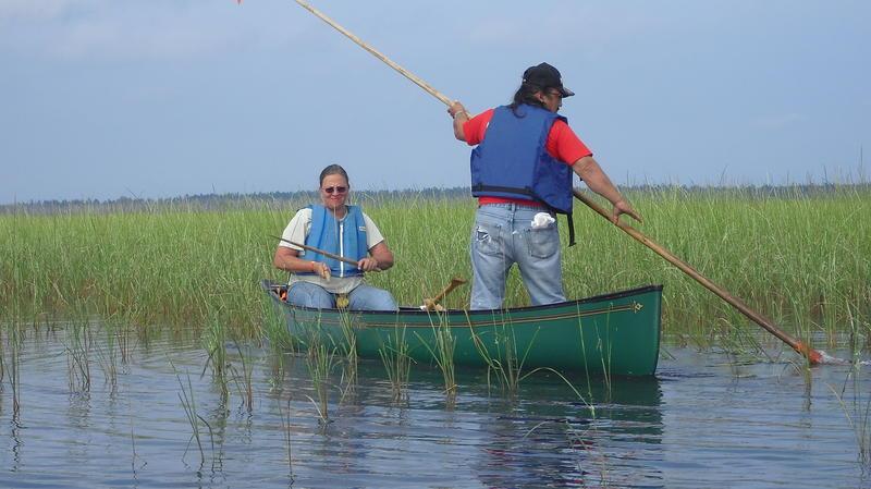 Barbara Barton and Roger LaBine navigate a large wild rice bed on Tawas Lake. (BARBARA BARTON)
