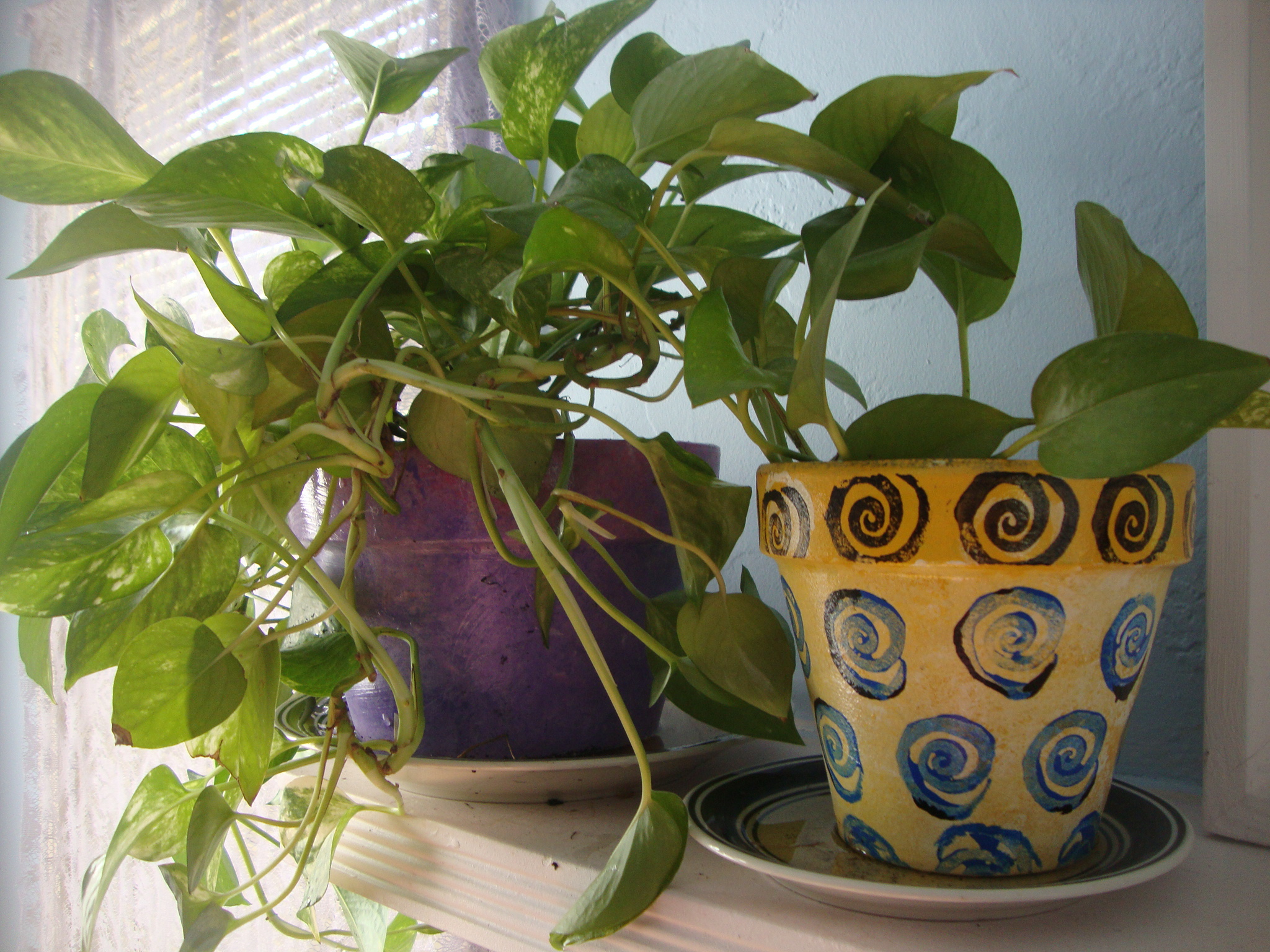 Painted Pot with golden pothos by Julie Jordan Scott/CC BY
