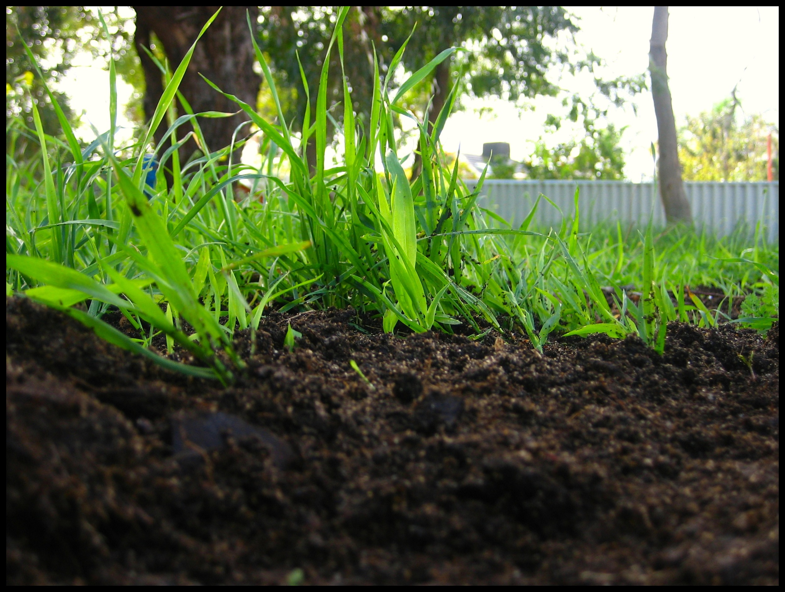 Compost  by Diana House/CC BY