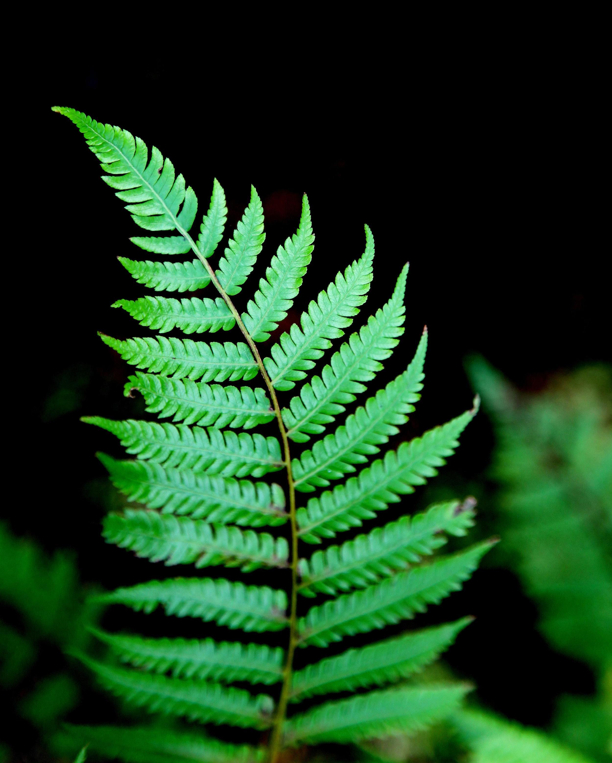 green_fern.jpg