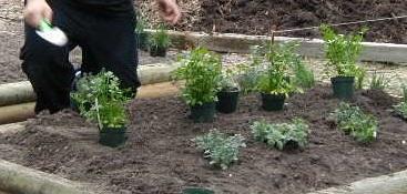 Herbs-1-046.jpg