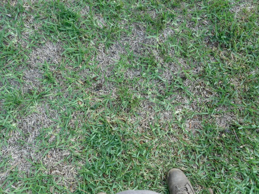 5-14-HATCH-GRASS-PROBLEM-3.jpg