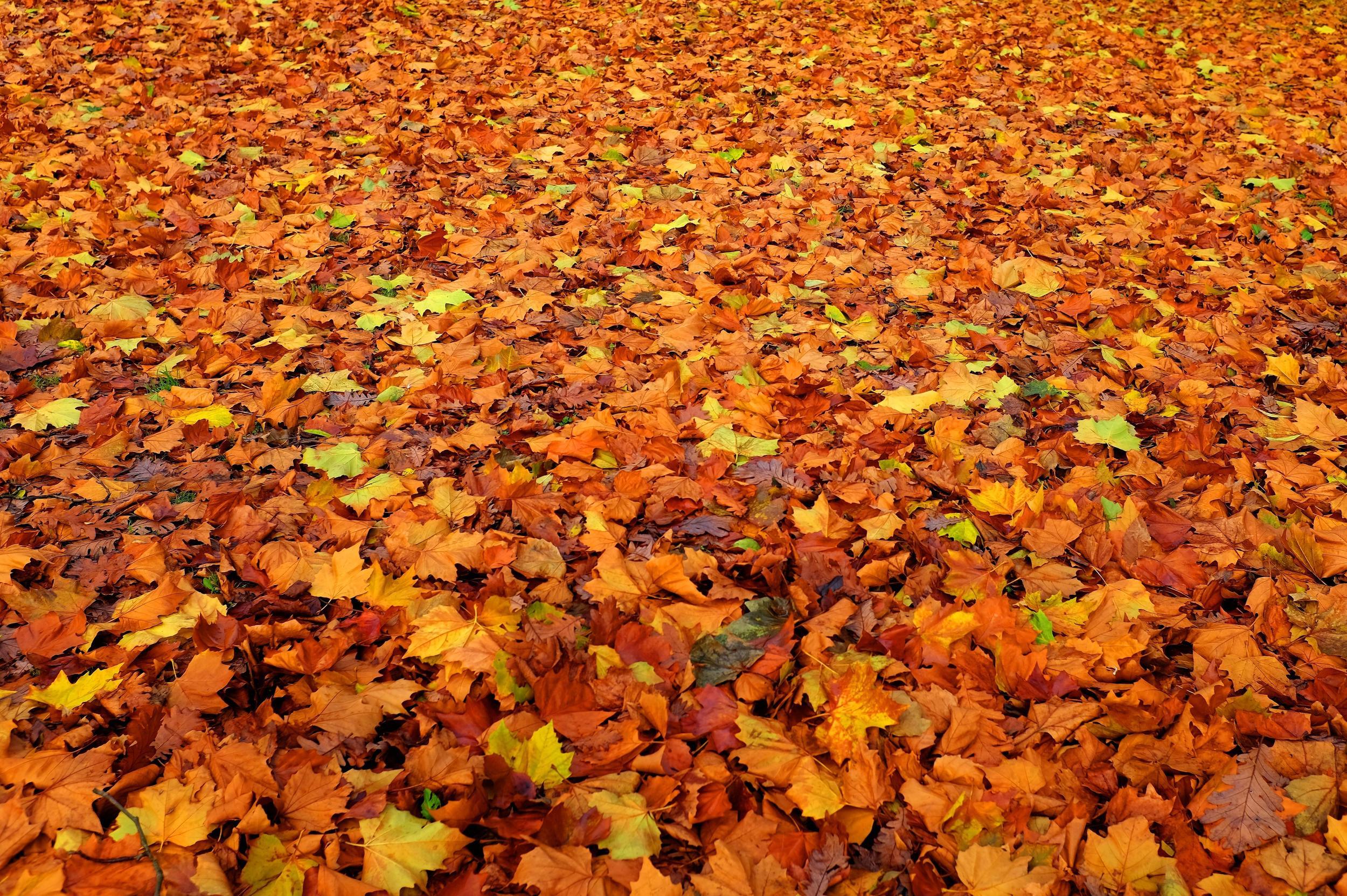 leaf_litter.jpg