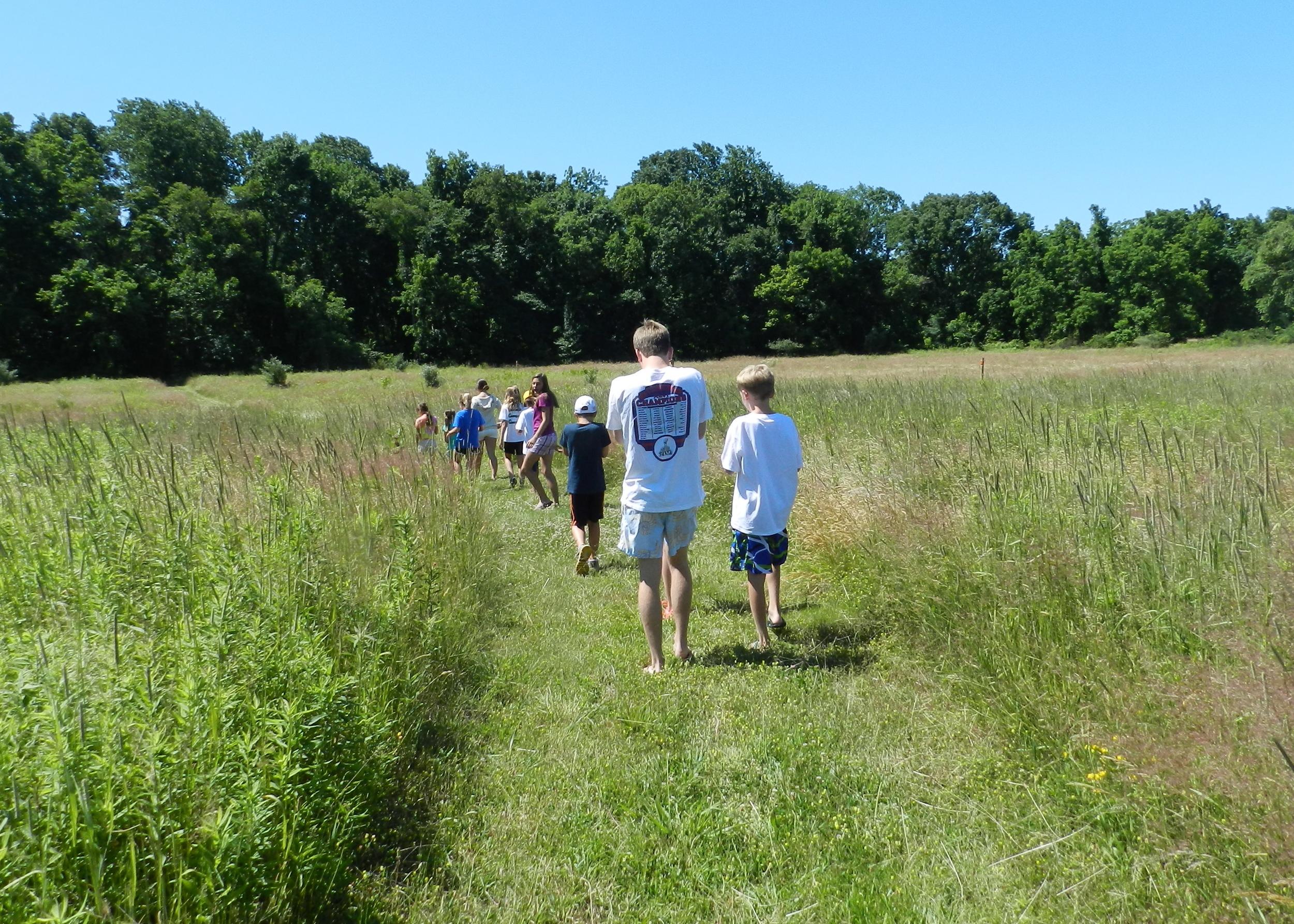 A walk through the meadow