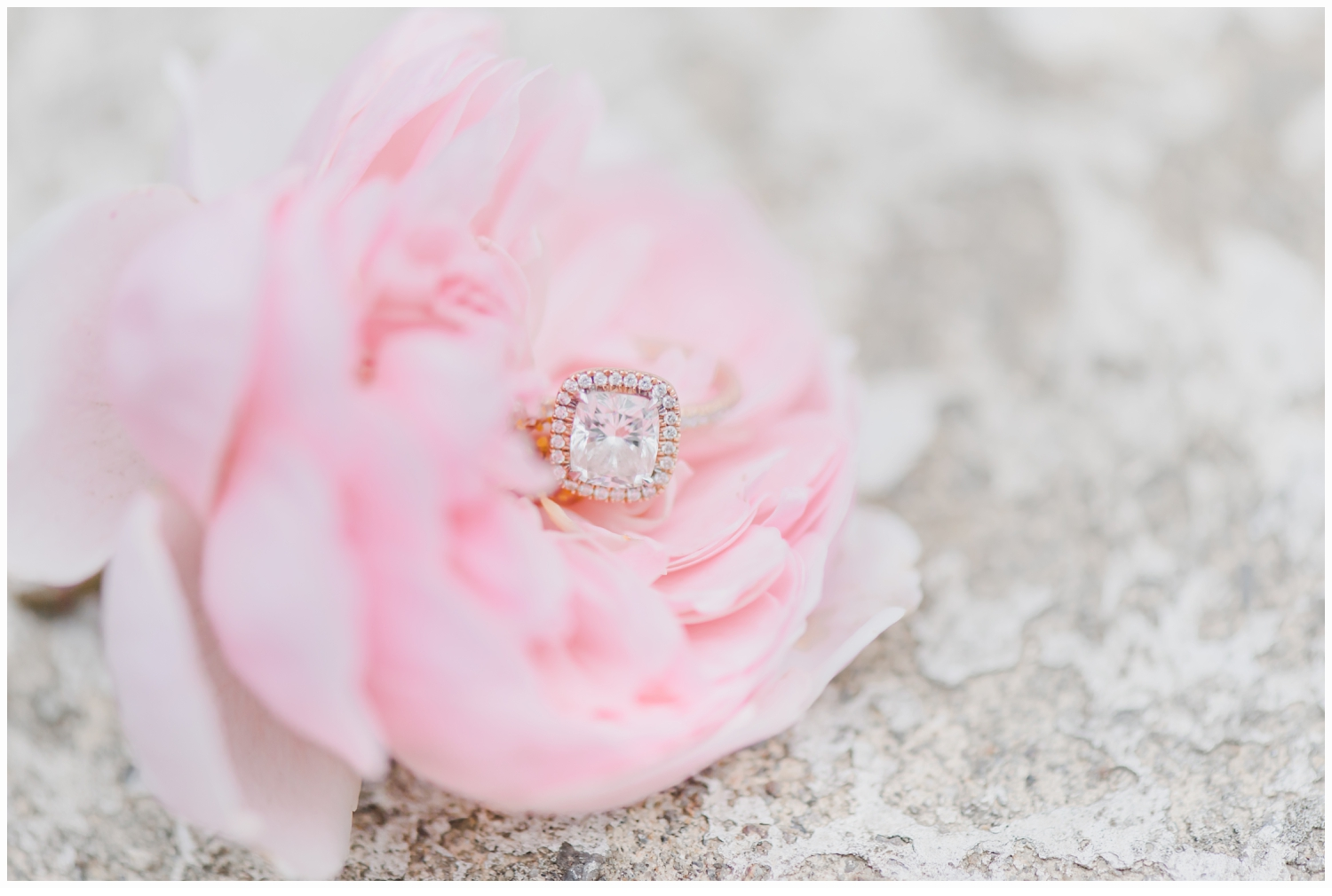 a rose with engagement ring