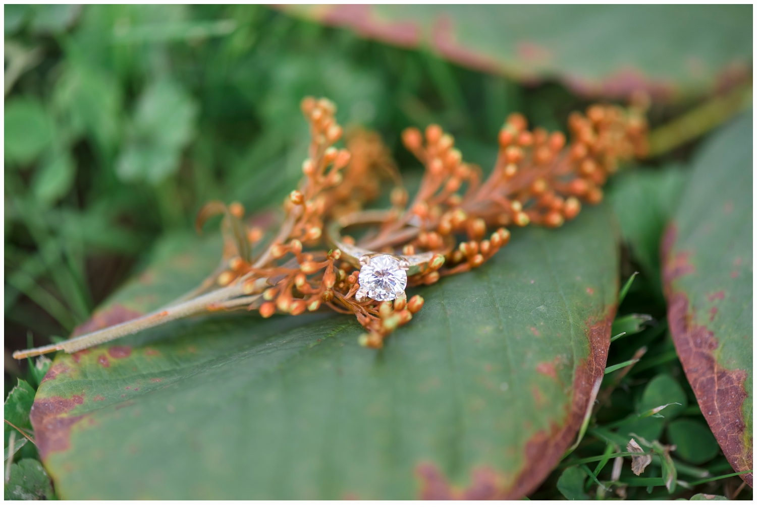 engagement ring on a pretty leaf