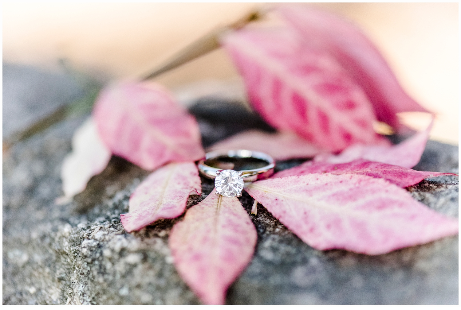 engagement ring on pretty pink leaves