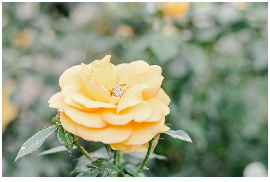 yellow rose with an engagement ring in the center