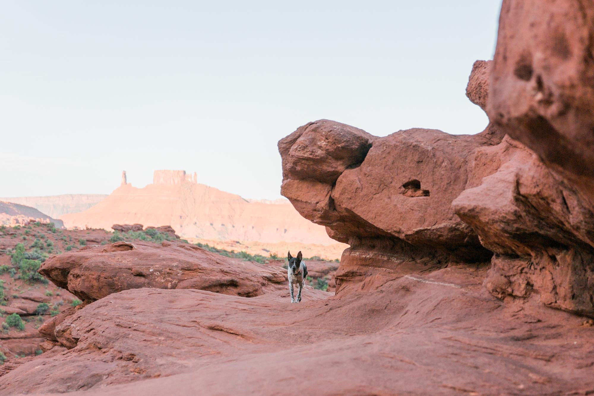 dog-desert-moab