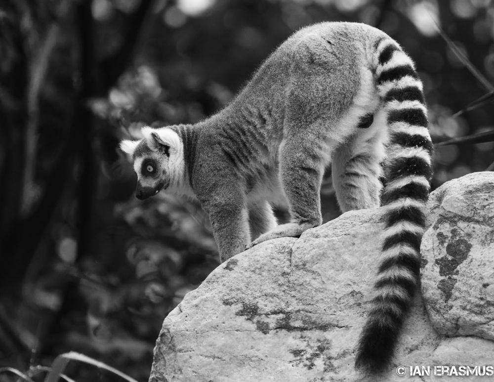 Zoo-1.jpg