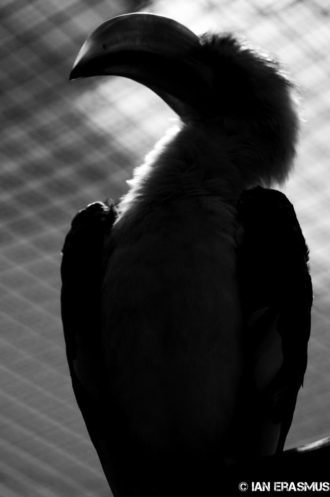 Zoo-16.jpg
