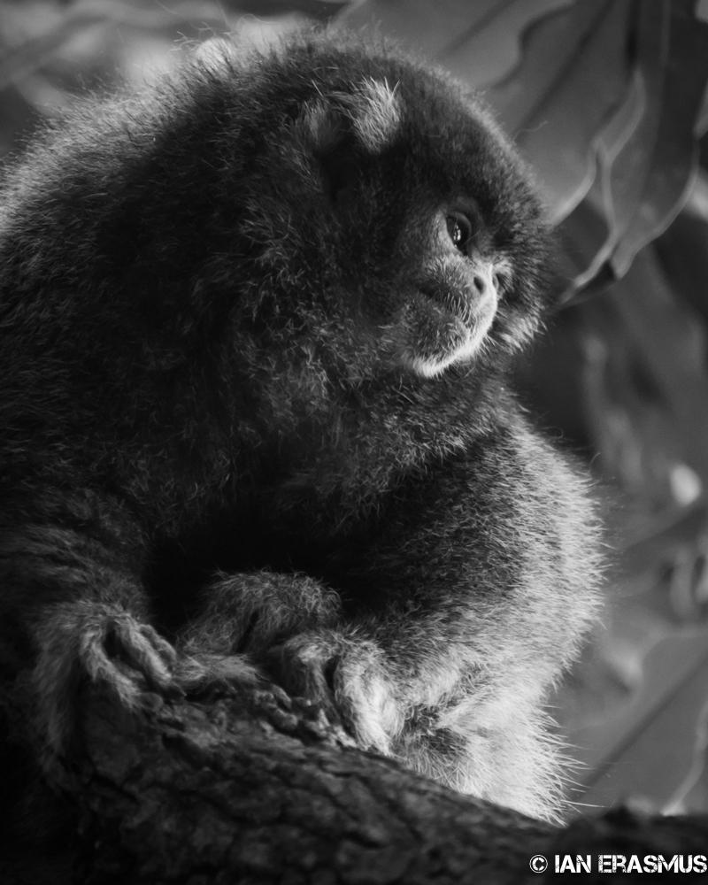 Zoo-19.jpg