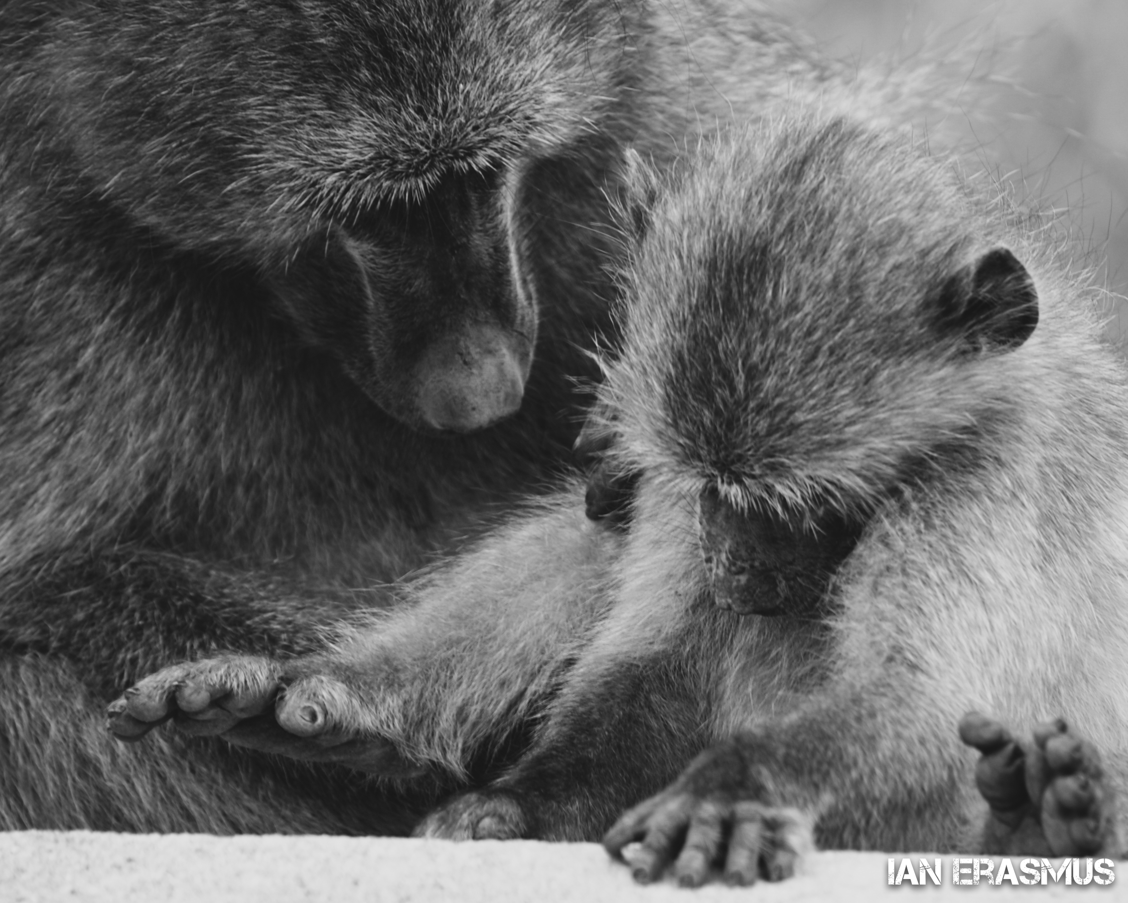 Animals-4.jpg