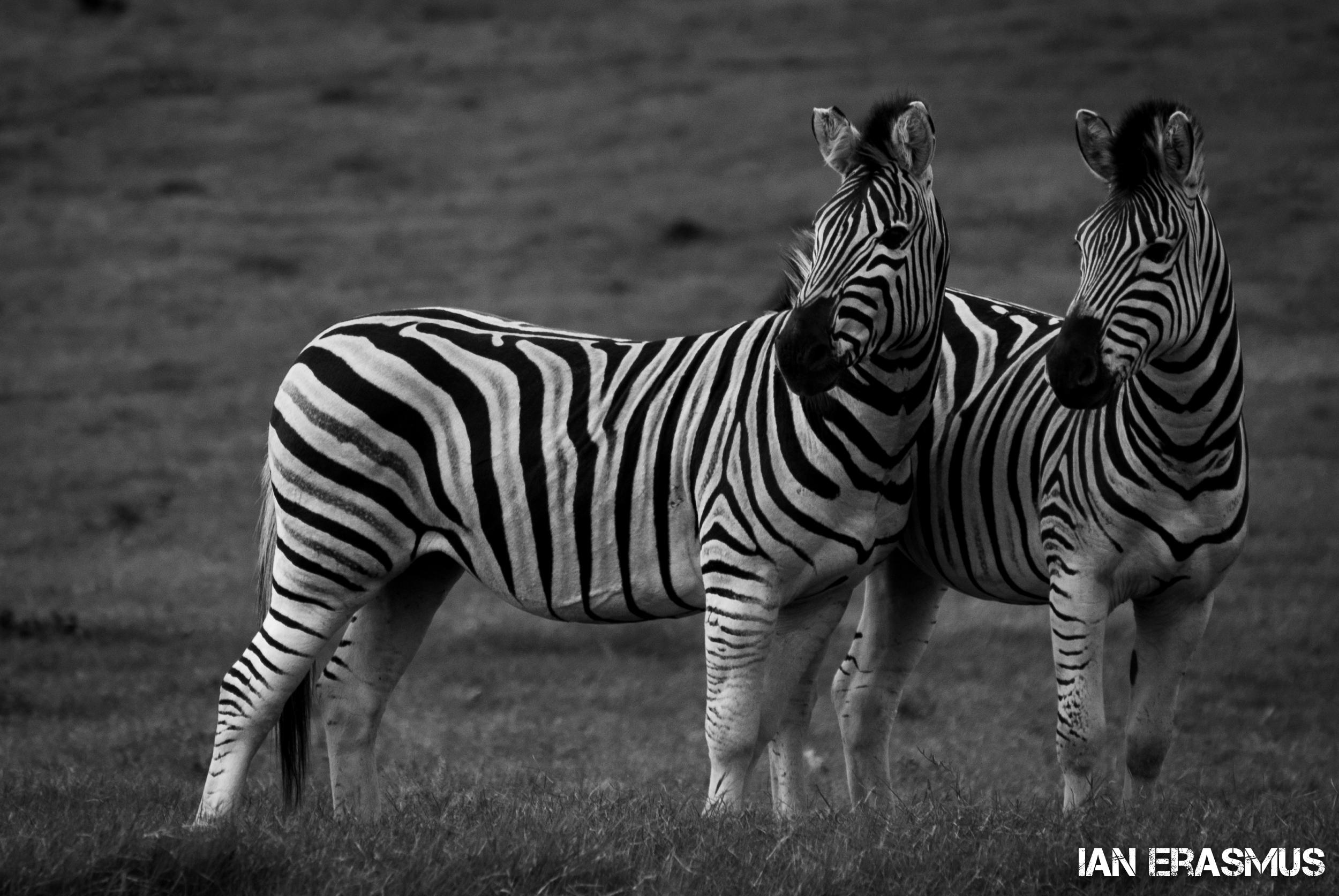 Animals-13.jpg