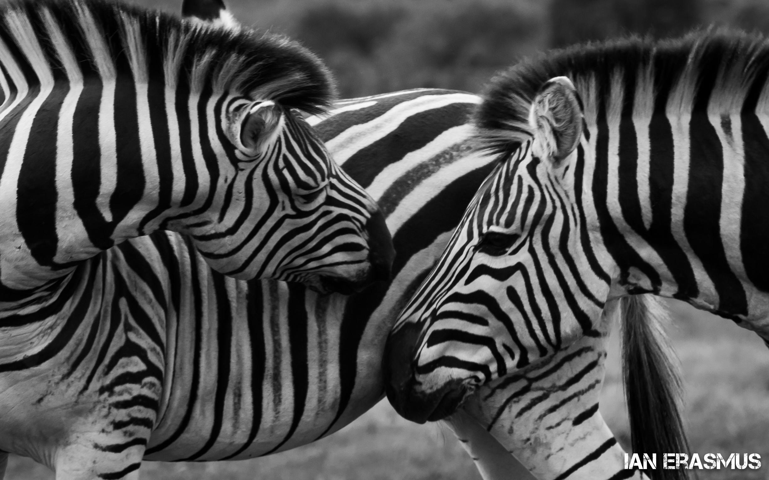 Animals-15.jpg