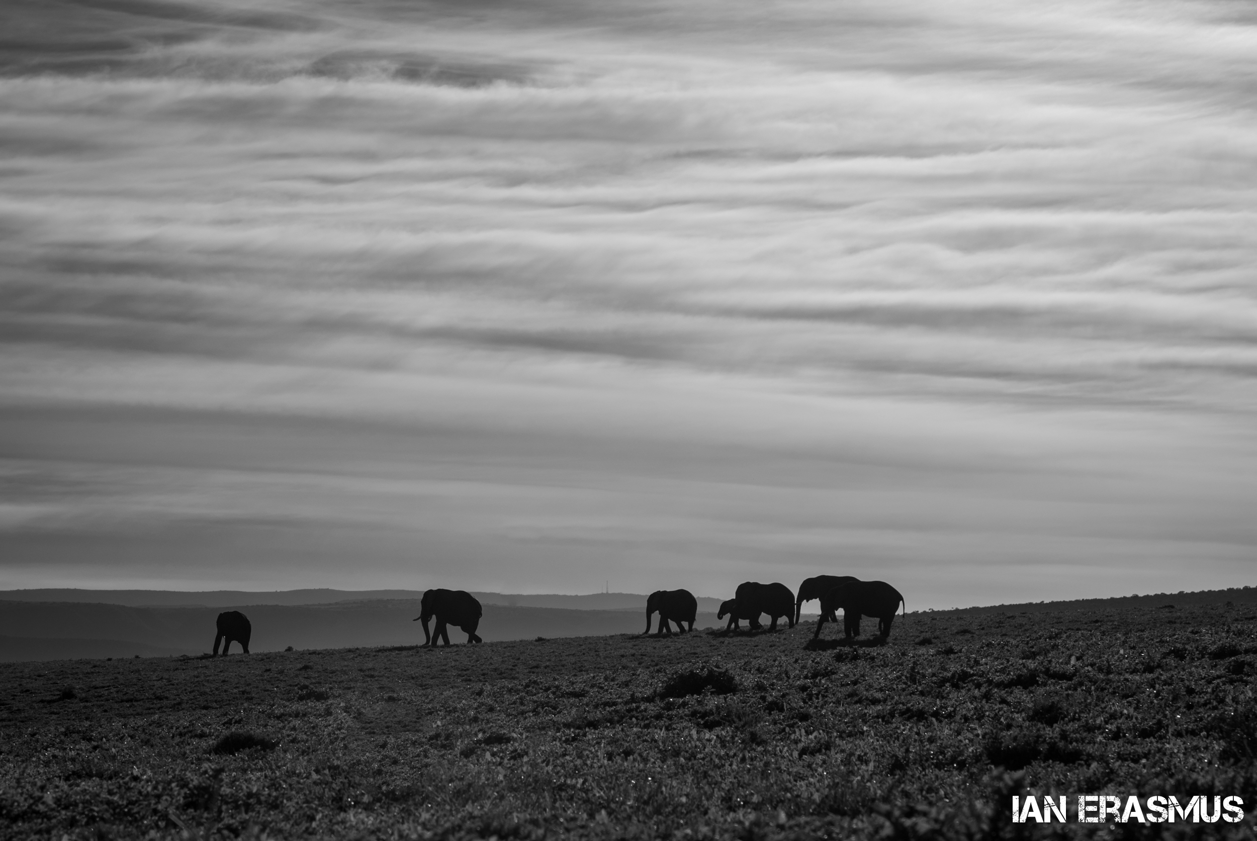 Animals-16.jpg