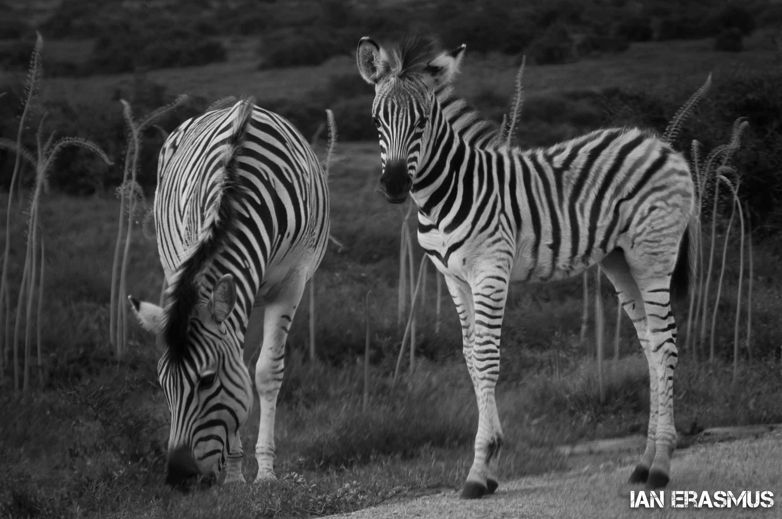 Animals-32.jpg