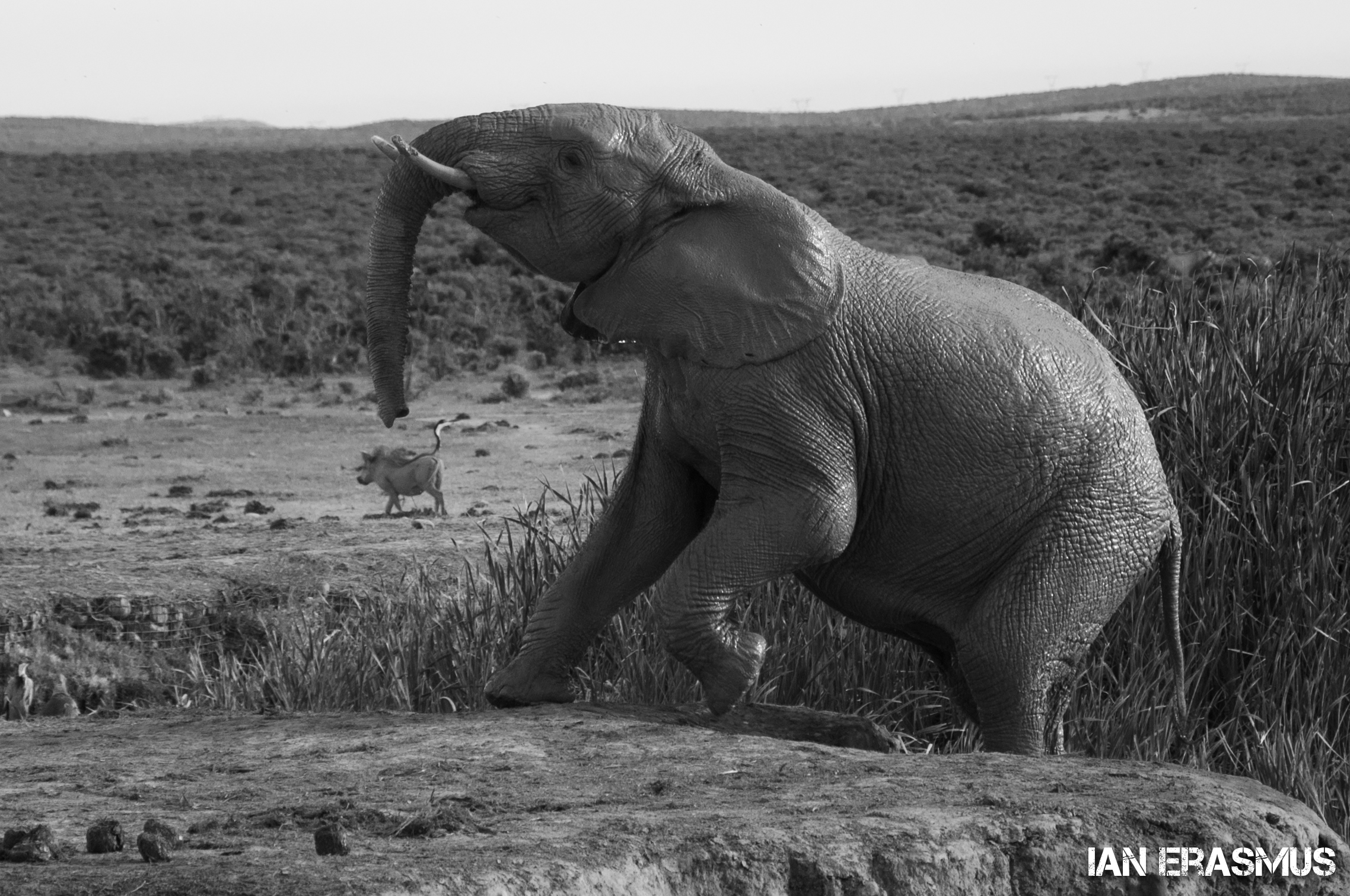 Animals-36.jpg