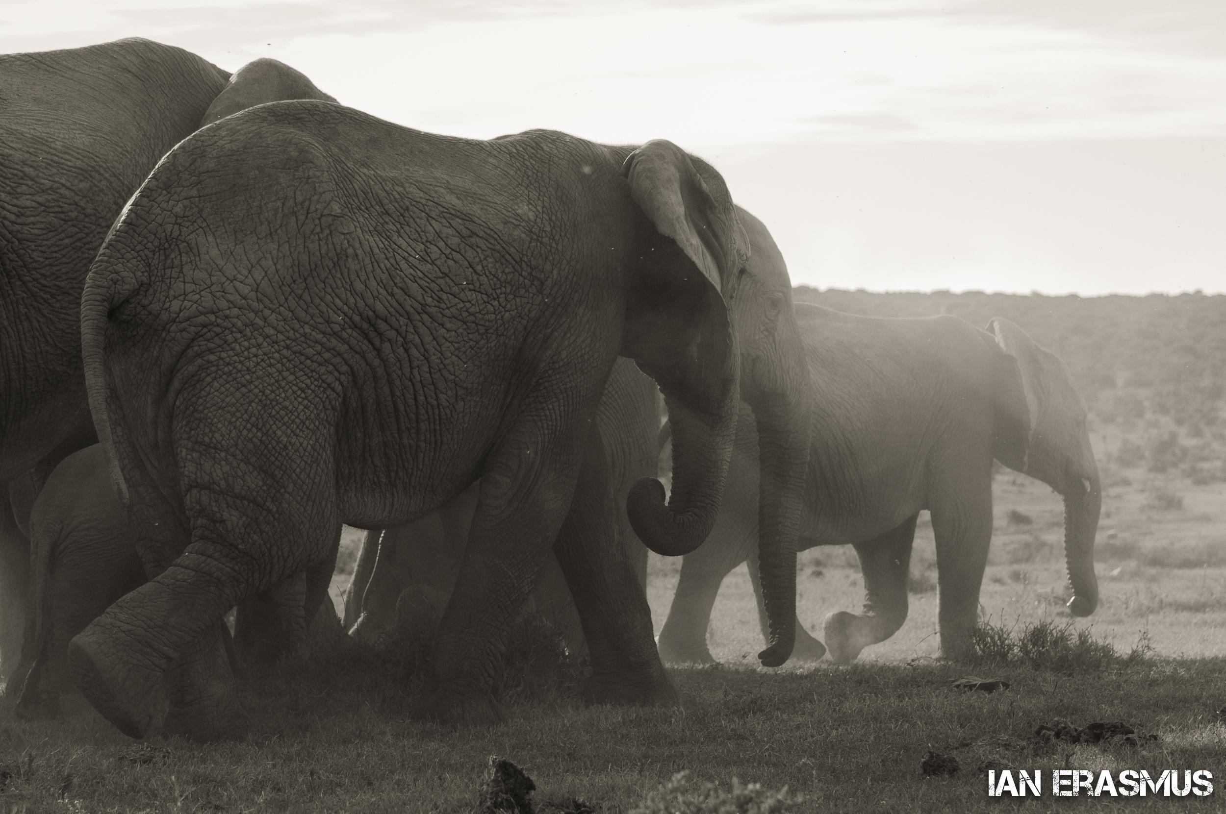 Animals-38.jpg