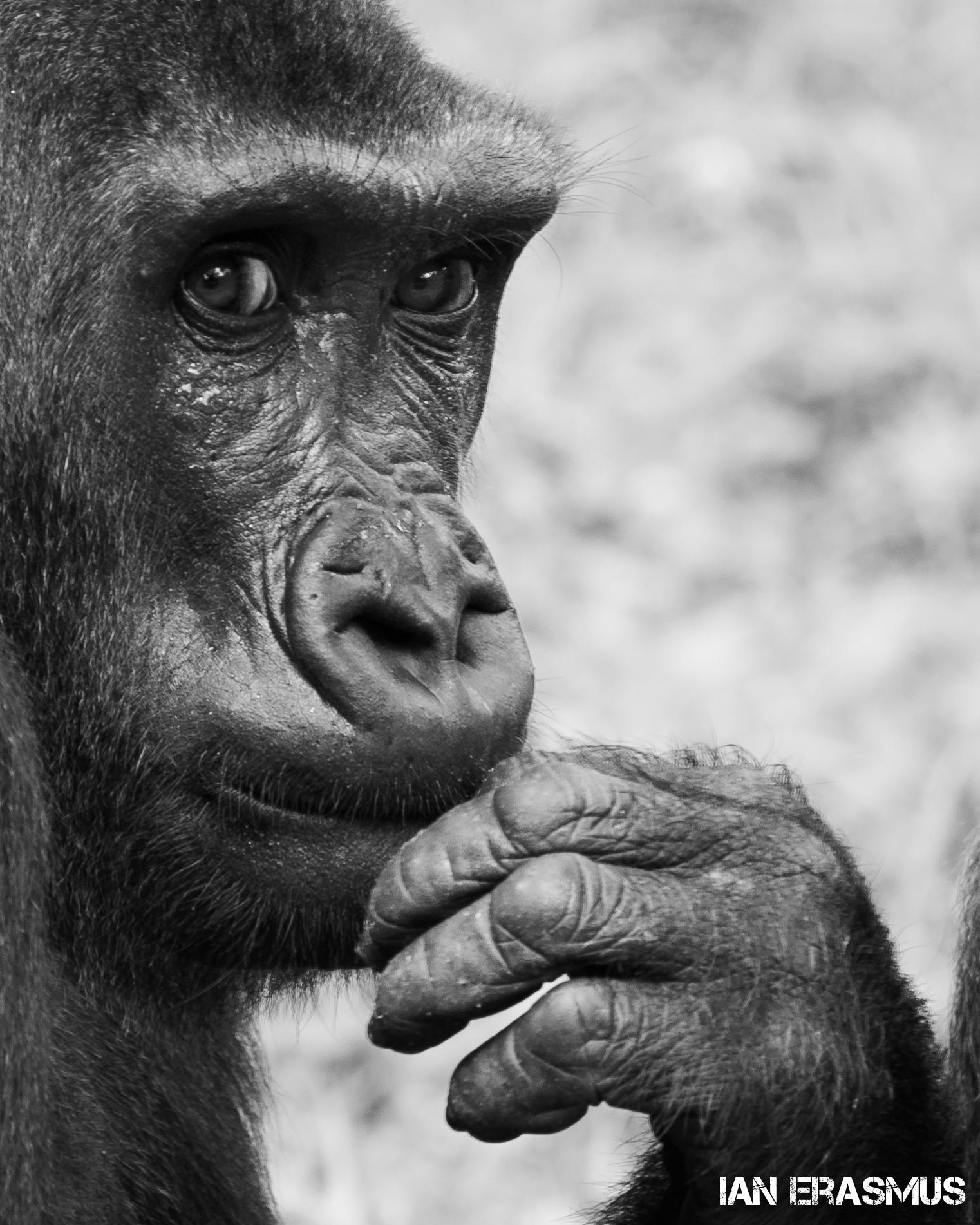 Animals-51.jpg