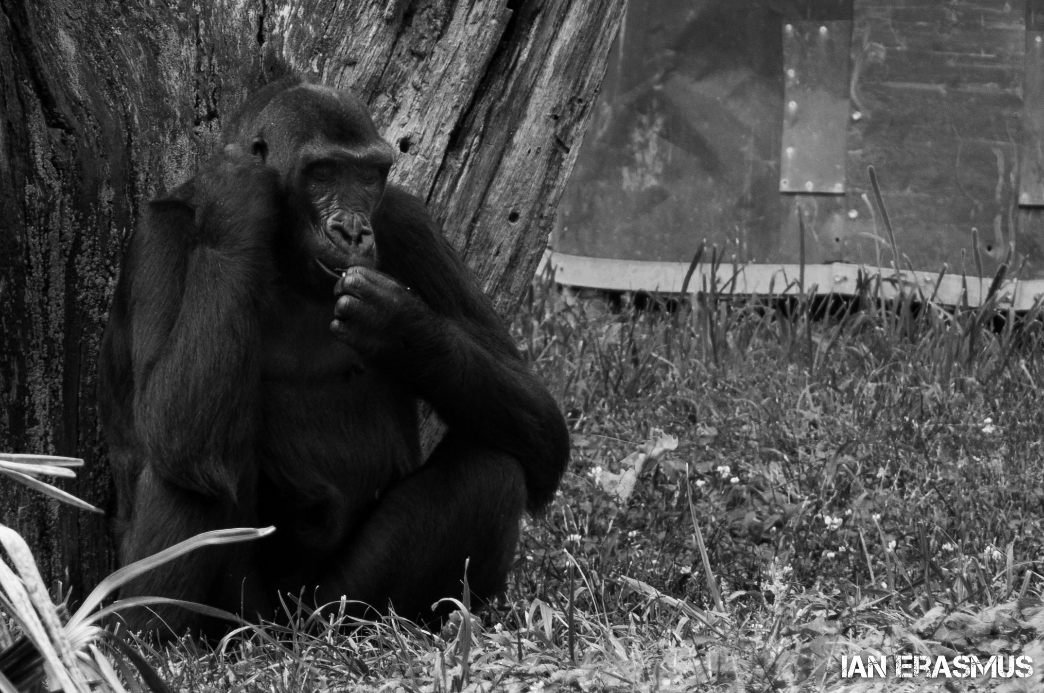 Animals-53.jpg