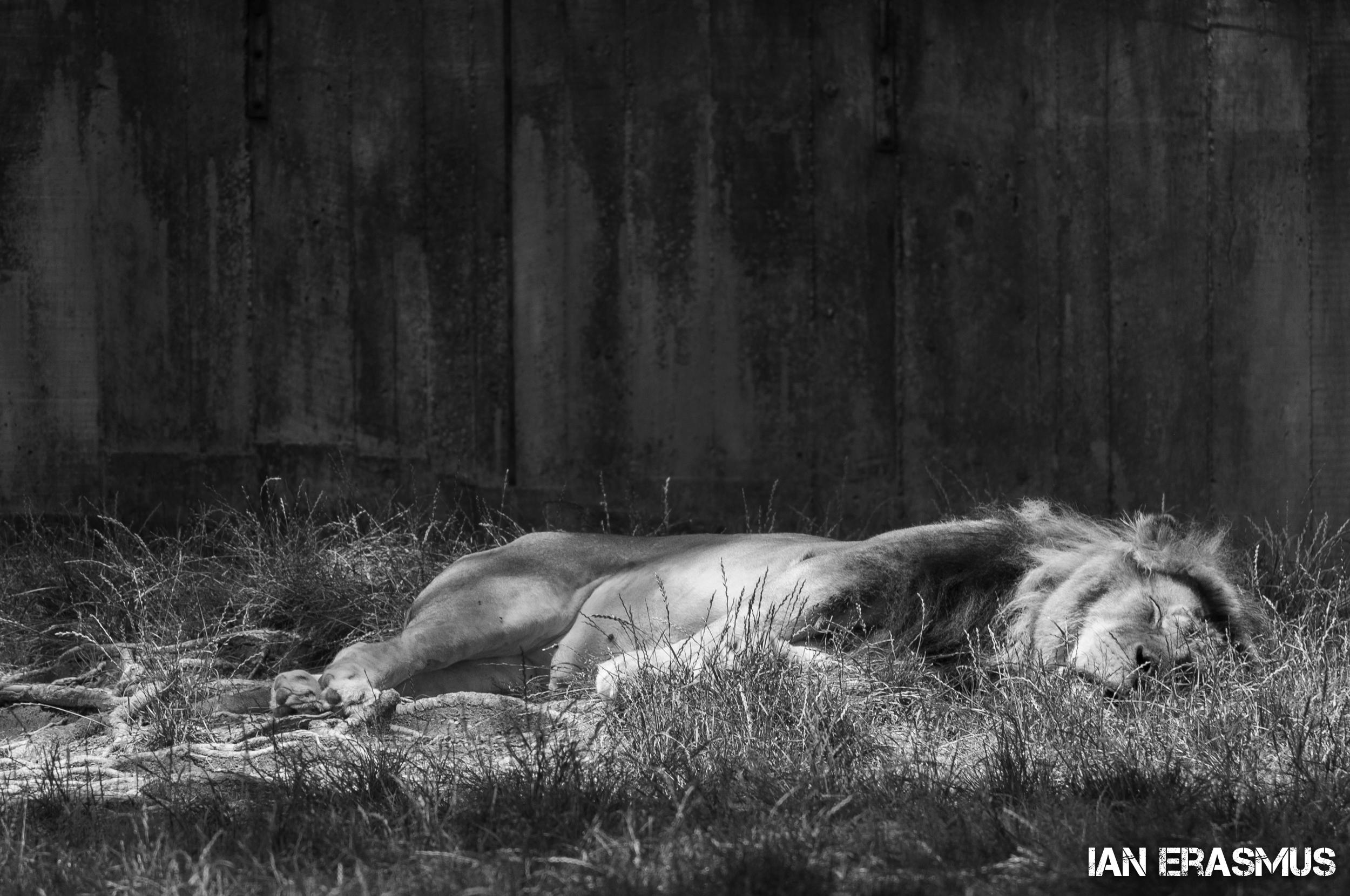 Animals-58.jpg