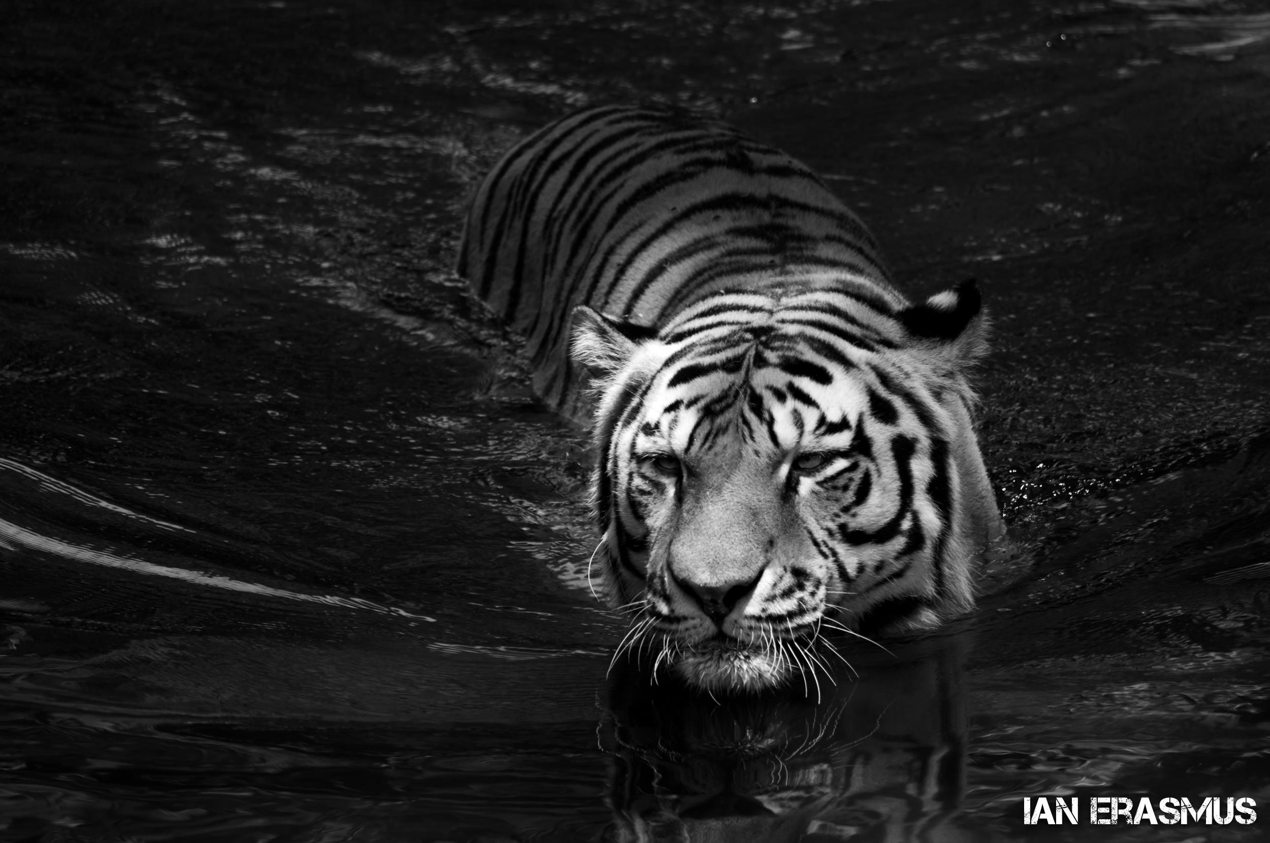 Animals-59.jpg