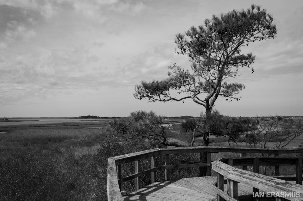 Assateague Island-26.jpg