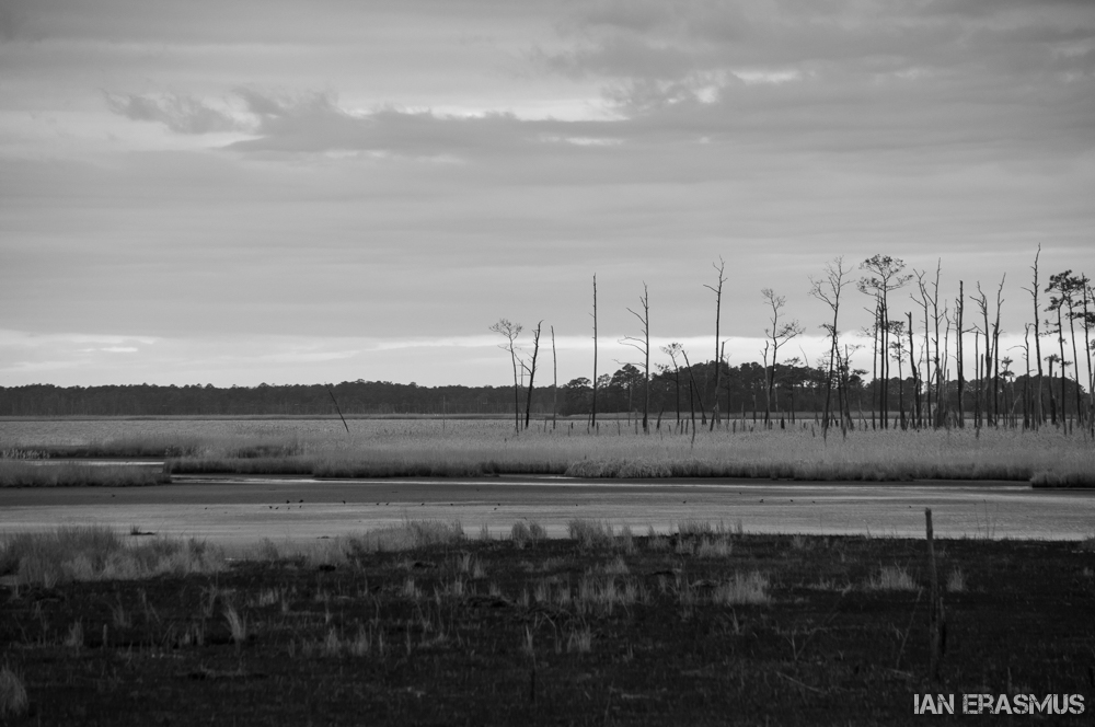 Blackwater Wildlife Refuge-2.jpg